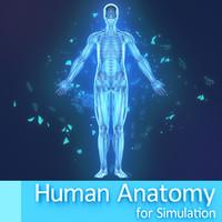 free human simulation 3d model
