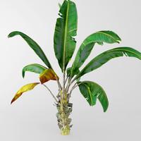 banana plant 3d max