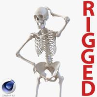 3d model human female skeleton rigged