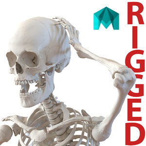 ma human female skeleton rigged