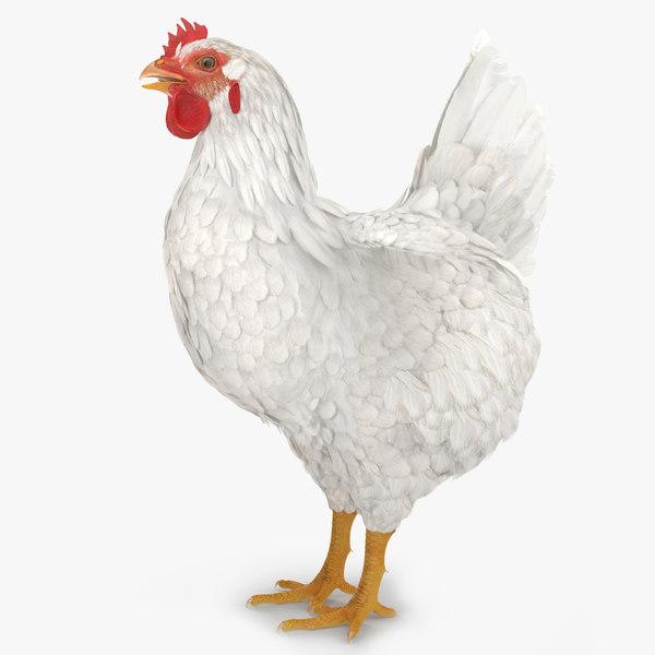 3d white chicken model