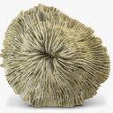 Mushroom Coral 3D models