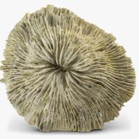 3d model mushroom coral