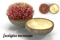 eucalyptus flower 3d model