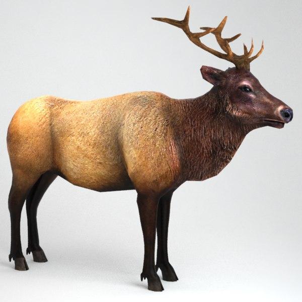 3d male elk model