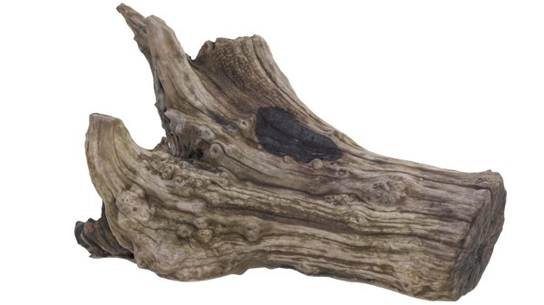 3d model petrified wood stump