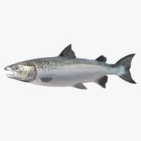 3d model atlantic salmon fish