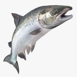 3d atlantic salmon fish attacks model