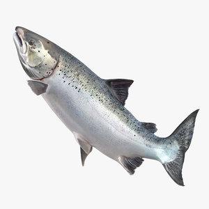 3d model atlantic salmon fish rigged