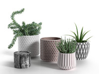 Pots with Donkey's Tail and Aloe Vera