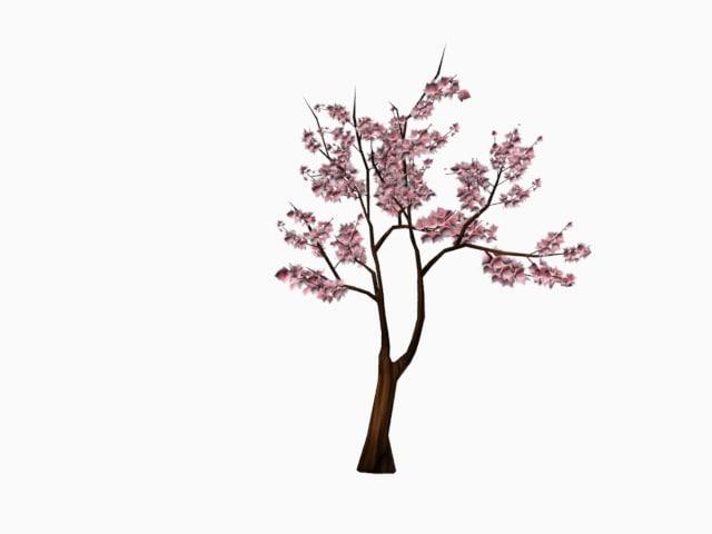 sakura tree x