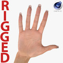 Female Hand 2 Rigged for Cinema 4D
