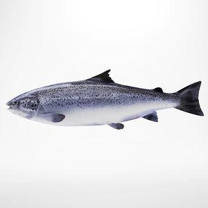 3d salmon fish