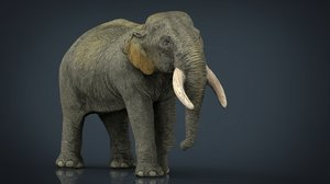 asian elephant mother max