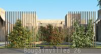 Bougainvillea 26