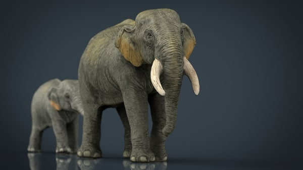 asians elephants mother babe 3d model