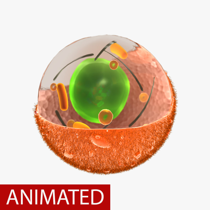 3d female ovary model