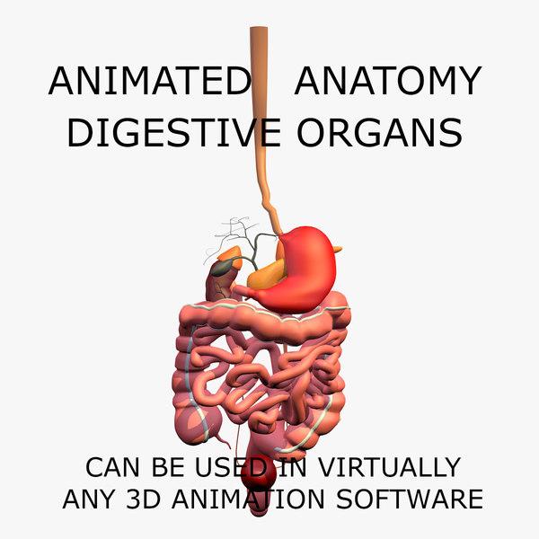 c4d anatomy digestive internal organs