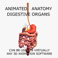 anatomy digestive internal organs c4d