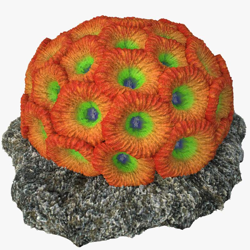 coral honeycomb v1 3d model