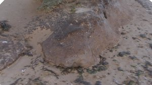 obj beach mud mound -