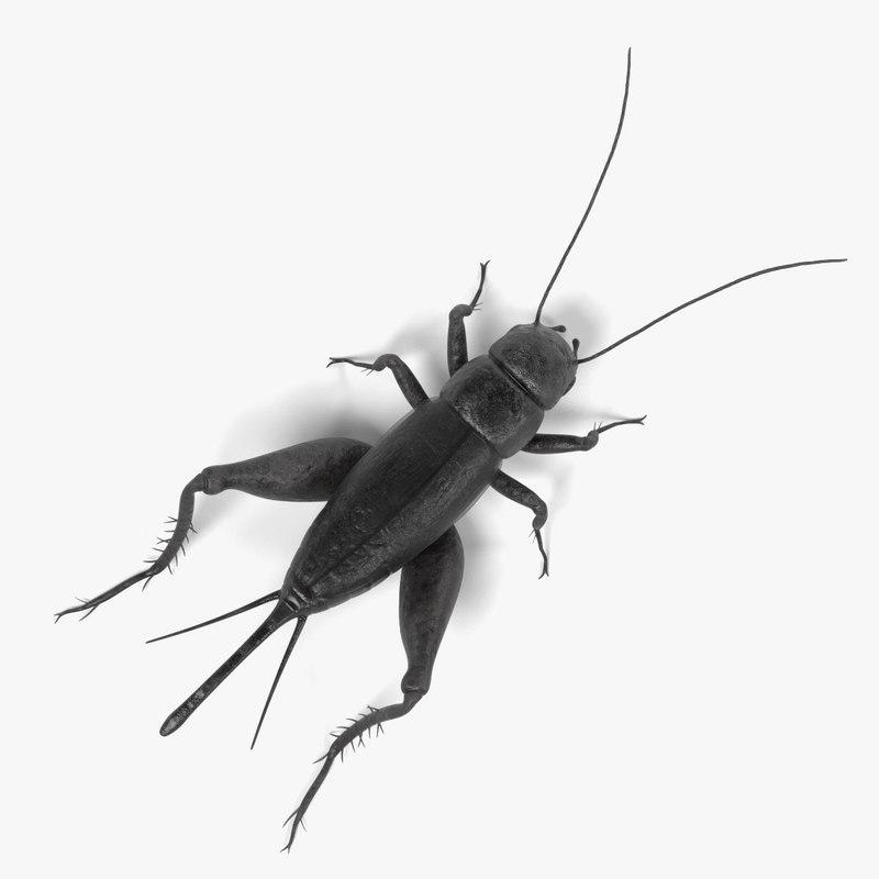 3ds field cricket