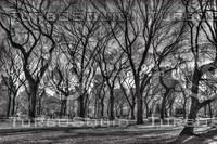 NEW YORK CENTRAL PARK B&W