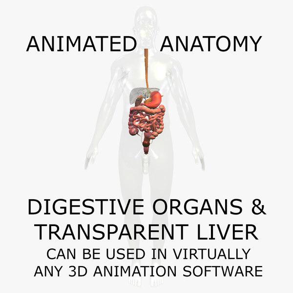 3d anatomy digestive internal organs model