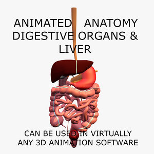 3d anatomy digestive internal organs