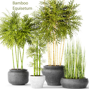 3d model bamboo trees
