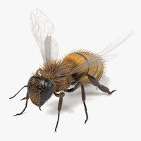3d common bee
