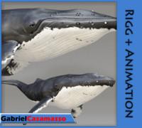 3d humpback whale - megaptera model