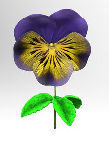 3d obj viola tricolor