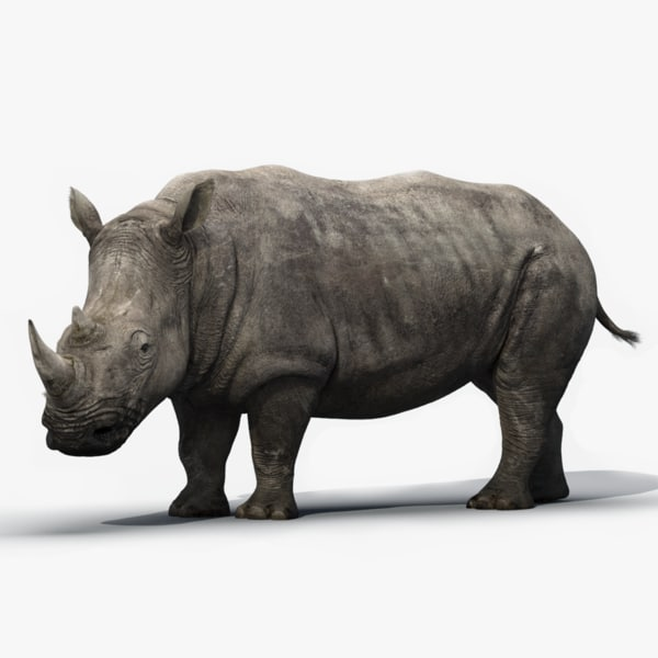 3d model rhino rigged