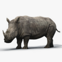 Rhinoceros 3D models