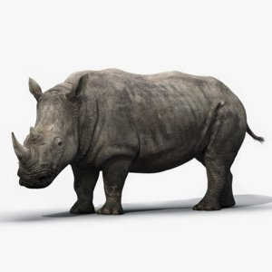 3d model rhino rigged