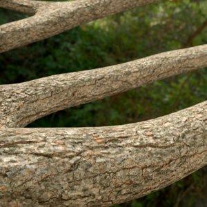 3d model jungle logs