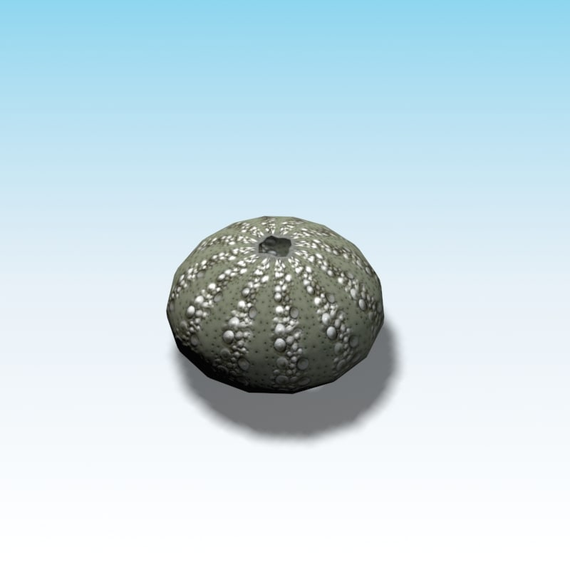 sea urchin ready games 3d model