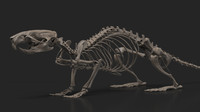 3d rat skeleton model
