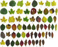 Leaf Pack: Fall 2016