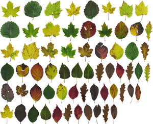 Leaf Pack: Fall 2016