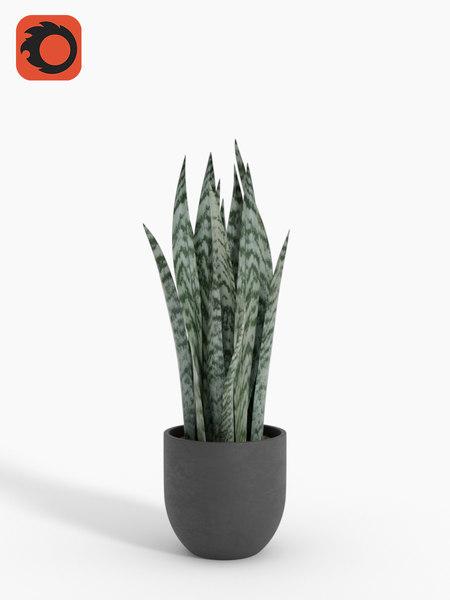 max snakeplant houseplant corona