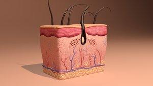 max skin anatomy
