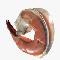 shrimp max