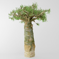 3d madagascan baobab model
