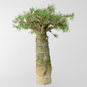 3d madagascan baobab model