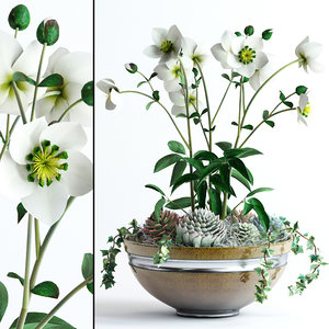 realistic bowl hellebores flowers 3d max
