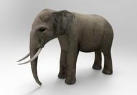 asia elephant x