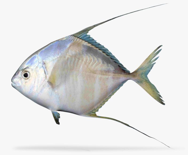 3d model threadfin jack