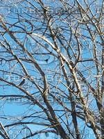 Blue sky through Branches